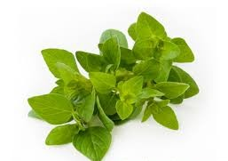 خواص درمانی گیاه دارویی پونه