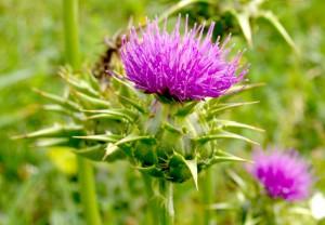 کاهش قند خون و گیاهان دارویی