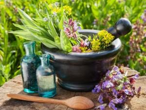 گیاهان دارویی کاهش دهنده قند خون