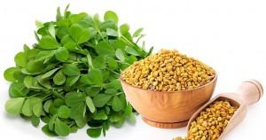 گیاه دارویی شنبلیله و کاهش قند خون