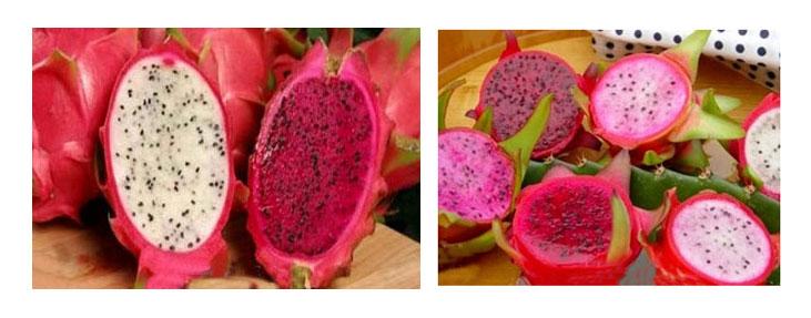 میوه عجیب اژدها Dragon Fruit