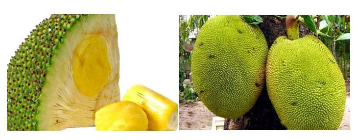 میوه عجیب جاک فروت Jackfruit