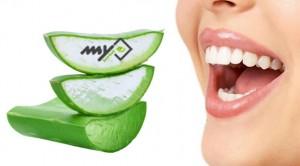 اثر آلوئه ورا بر پوسیدگی دندان