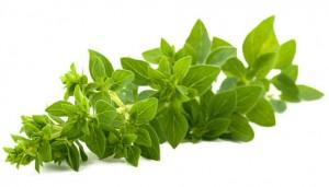 خواص گیاه دارویی پونه