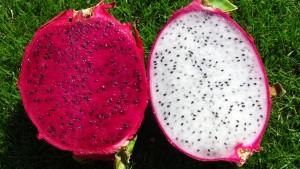 خواص میوه کاکتوس