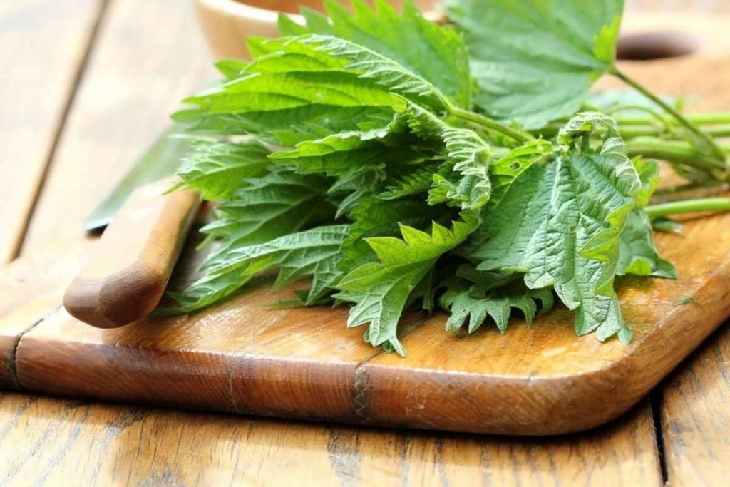 درمان کم خونی با گیاه گزنه