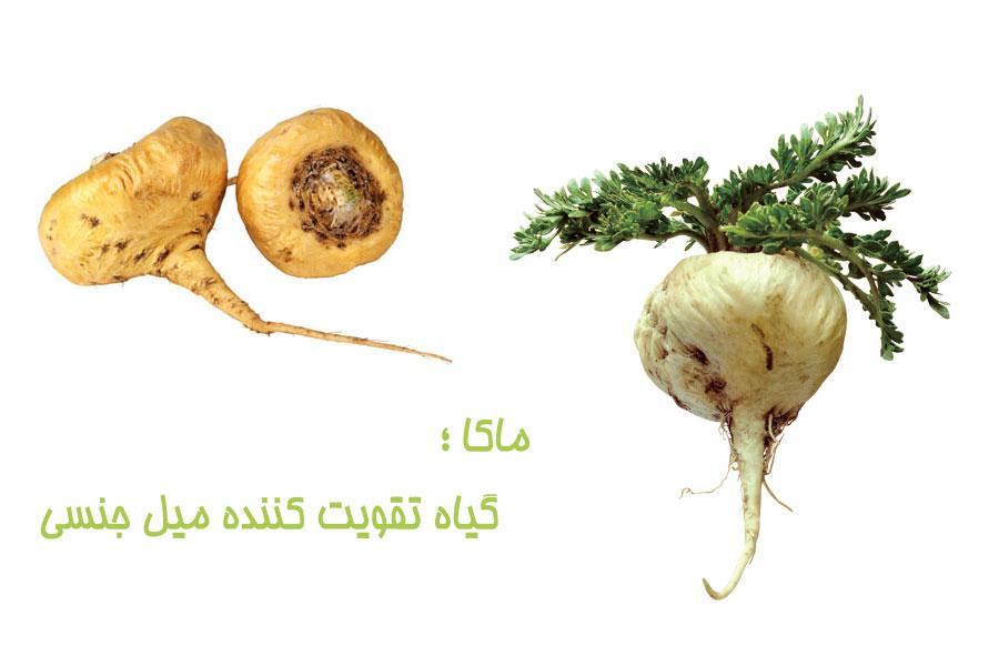 گیاه تقویت کننده ی میل جنسی ؛ ماکا