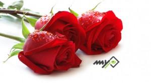 تاثیر گل سرخ در بهبود درد مفاصل