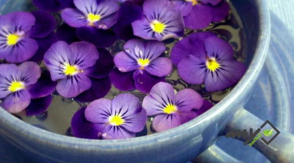 درمان سرفه کهنه و مزمن با گل بنفشه